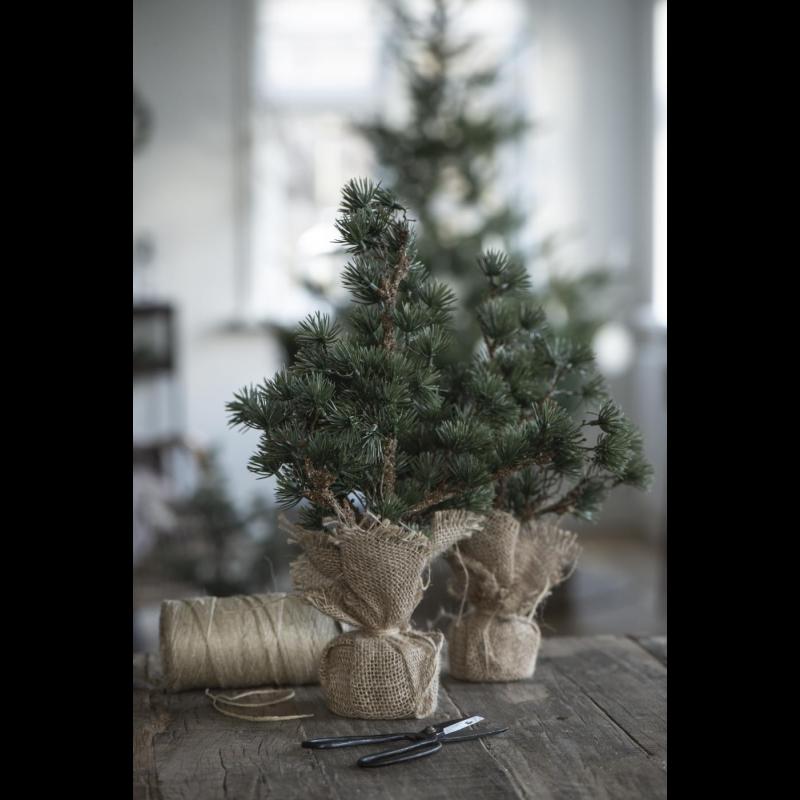 Cedertræ med jutefod