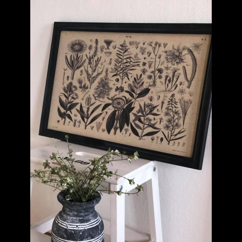 Billede med plantemotiv og sort ramme