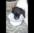 Hundeskål i hvid emalje